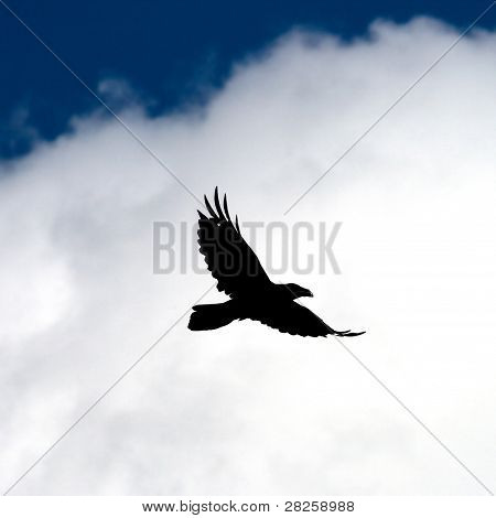 Fly Raven.