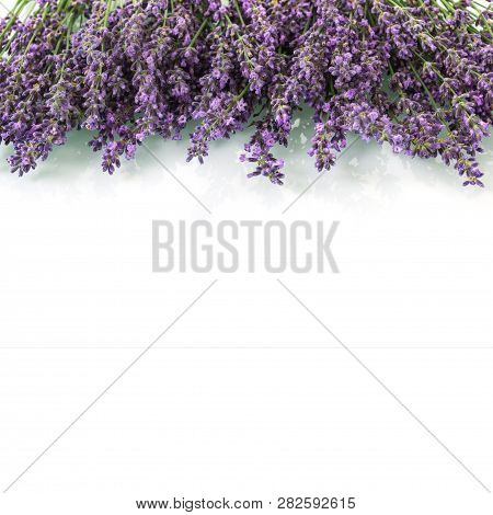 Fresh Fragrant Lavender Branches With Empty Place For Inscription Isolated On White Background