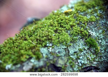 Moss Covered Tree In The Autumn Closeup