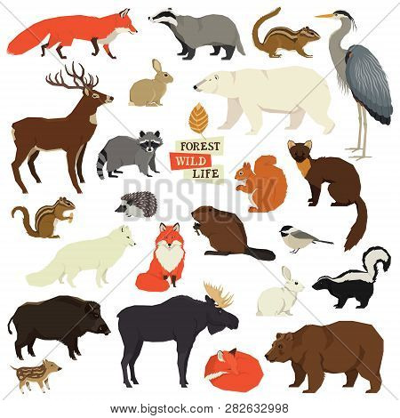 Forest Wild Life Isolated Objects Animals Set