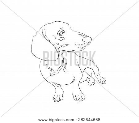 Dachshund Images Illustrations Vectors Free
