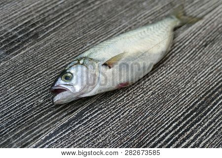 On The Wooden Floor There Is One Small Bluefish And One Lemon,