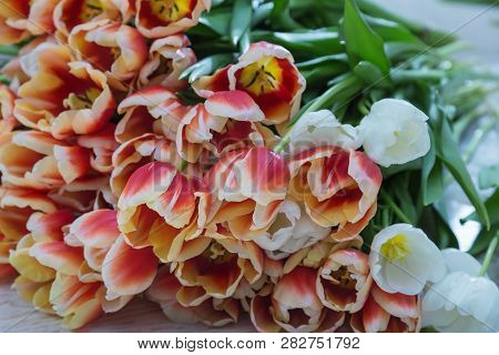 Big Bouquet Of Red Tulips. Beautiful Spring Flowers. Natural Background. Floral Fon.