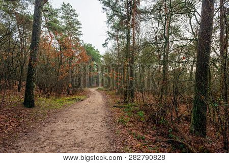 Narrow Sandy Path Meandering Through The Autumn Forest. The Photo Was Taken In Boswachterij Dorst, N