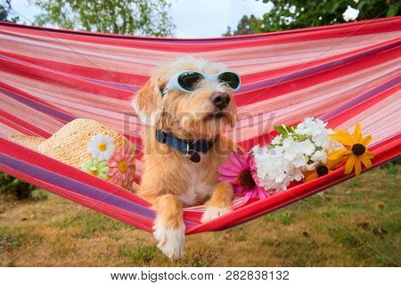 Funny dog on vacation in hammock with sunglasses head,and flowers