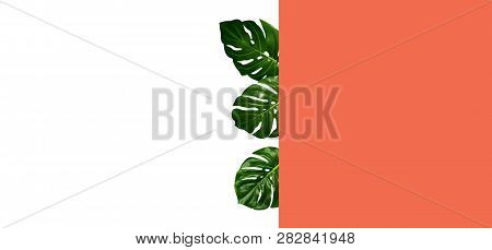 Tropical Leaves Isolated On White, Trendy Coral Color And White Background With Space For Text, Conc