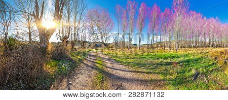 Scenic Nature Landscape And Path.colorful Meadow And Forest Scenery.beautiful Natural Landscape With