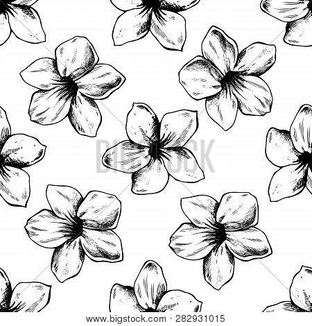 Seamless Pattern With Black And White Allamanda, Vriesea