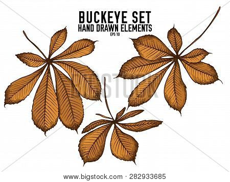Vector Collection Of Hand Drawn Colored  Buckeye