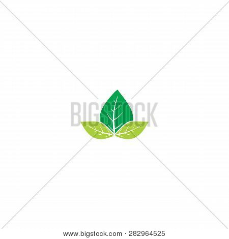 Green Vector Leaves Concept. Three Leaves Icons Art Image. Simple Leaves Isolated On White Backgroun