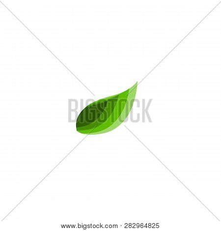 Green Vector Leaves Concept. Leaves Icons Art Image. Simple Leaves Isolated On White Background.  Fl
