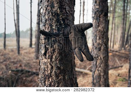 In The Forest I Suddenly Saw This Glove Attached To The Broken Off Branch Of A Pine Tree.