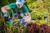 Caucasian Gardener in His 30s Working in a Garden. Trimming Plants Using Electric Cordless Trimmer. poster