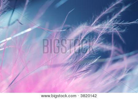 Fragile Feathers