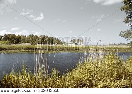 A River With Thickets Of Reeds And Trees On The Banks