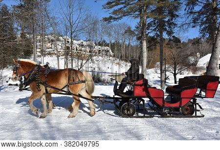 Horse Team Pulling A Sleigh In The Snow.