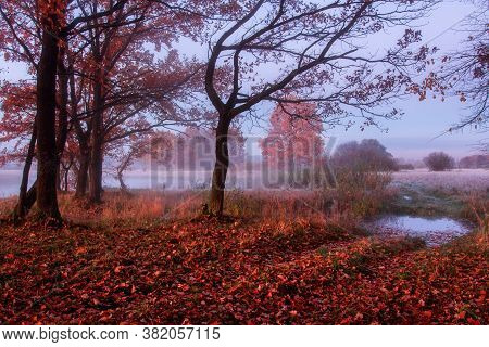 Picturesque Scenery Of Departure From Forest To Meadow On Rural Road. Autumn Scenery. Time Sunrise I