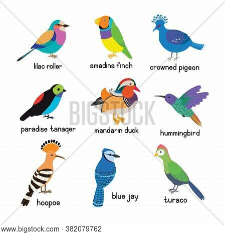 Set Of The Most Beautiful Birds On The Planet. Hoopoe, Crowned Pigeon, Turaco, Paradise Tanager, Man