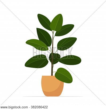Decorative Houseplant Planted In Ceramic Pot Garden Potted Plants Isolated Vector Illustration