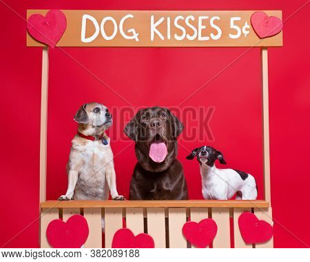 studio shot of three dog on an isolated background