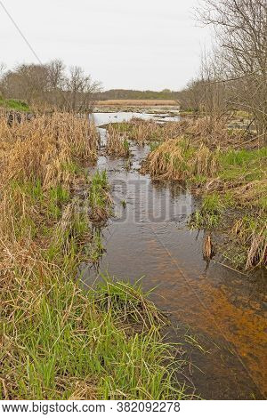 Quiet Stream Flowing Out Of A Wetland In Volo Bog State Natural Area In Illinois
