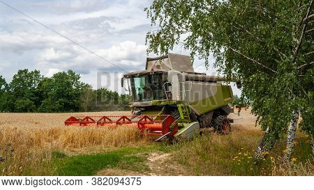 Modern Harvester At Work In Field During Gold Wheat Harvesting Season On Sunny Day. Harvesting Machi