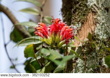 Background Of Beautiful Red Wildflowers, Parasitic Plant,high Angle View, Side Shot, Perching On The