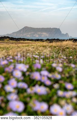 Beautiful Scenery Of Seongsan Ilchubong Inactive Volcano With Blurly Purple Flowers Foreground At Je