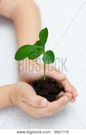 Small Green Plant In Children\'S Palms, Over White
