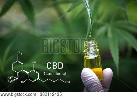 Cannabis Oil, Cbd Oil Cannabis Extract, Medical Cannabis Concept,