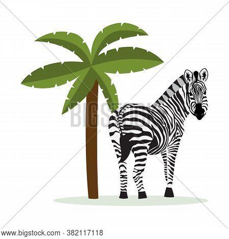 Cartoon Zebra Standing By Tropical Palm Tree - Flat Vector Illustration