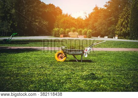 Metal Garden Wheelbarrow With Cut Grass Stands On The Lawn In The Garden. Cleaning And Caring For Th