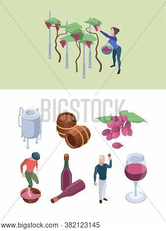 Wine Production. Vineyard People Working Winery Processes Technology Grapes Drink Bottling Big Barre