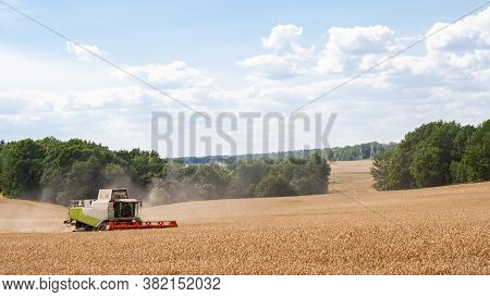Combine Harvester In Distance Harvests Ripe Wheat In Field, Against Of Trees And Blue Sky With Cloud
