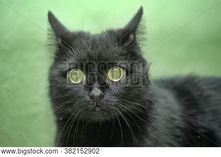 Black Cat With An Unhappy, Frightened Look
