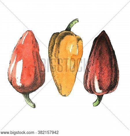 Hand-drawn Watercolor Image Of Garlic. Jpeg Only