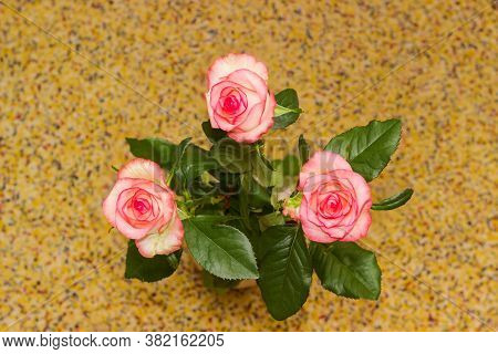 Bouquet Of Three Pink Roses On A Motley Spotty Blurred Background, Top View