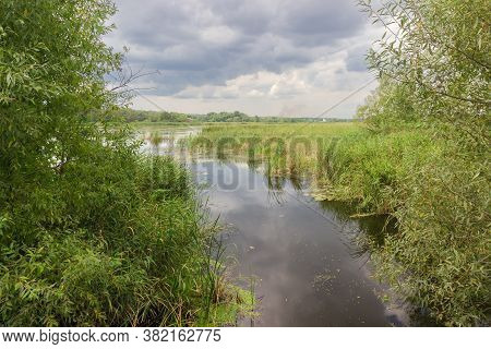 Plain Lake With Still Water Overgrown With Marsh Plants Surrounded By Willow Thickets Against The Cl