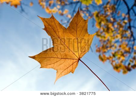 A Yellow Leaf On A Blue Background