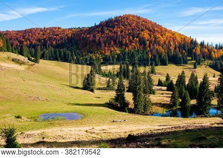 Mountain Landscape In Autumn. Forest In Fall Foliage On Top Of A Hill. Spruce Trees And Pond On A Gr