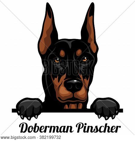 Doberman Pinscher - Color Peeking Dogs - Breed Face Head Isolated On White