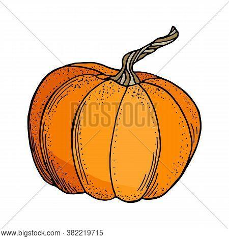 Vector Pumpkin Illustration. Cute Cartoon Orange Gourd Vegetable Isolated On White Background. Hand