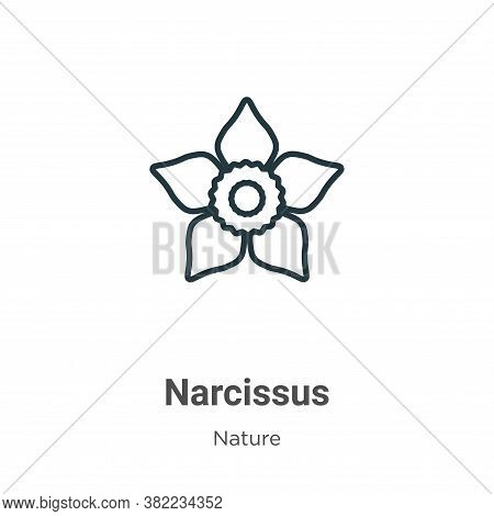 Narcissus icon isolated on white background from nature collection. Narcissus icon trendy and modern