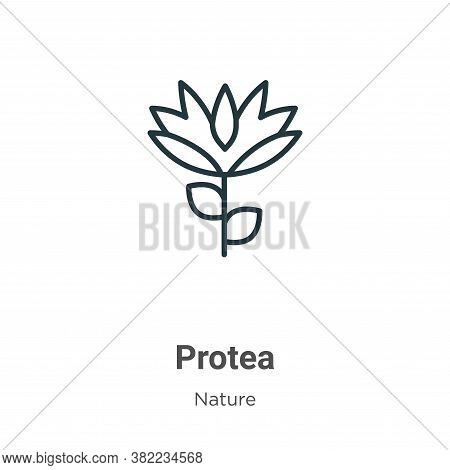 Protea icon isolated on white background from nature collection. Protea icon trendy and modern Prote