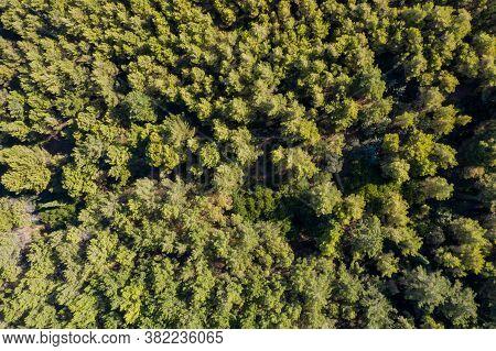 Aerial Drone View Of Shortleaf Spruce Forest Background