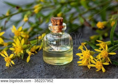A Bottle Of Essential Oil With Fresh Blooming European Goldenrod, Or Solidago Virgaurea Plant On A D