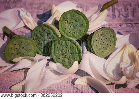 Indian Lotus Pod Or Nelumbo Nucifera Pods On Flower Petals