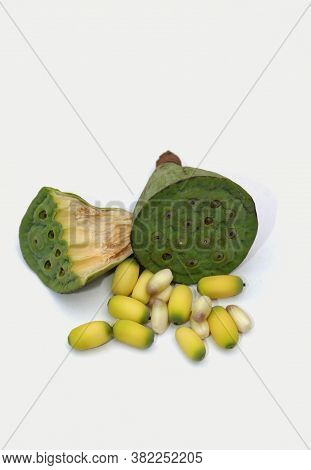 Indian Lotus Pods And Seeds Or Nelumbo Nucifera Isolated On White Background In Vertical Orientation