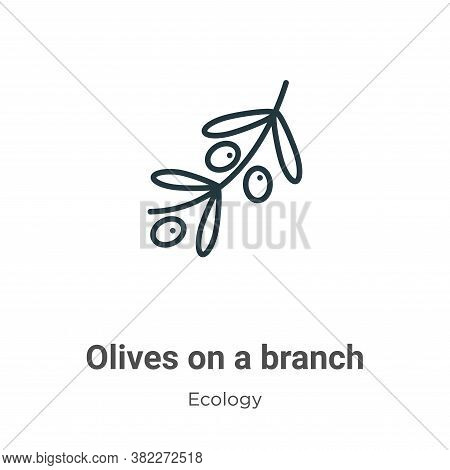 Olives on a branch icon isolated on white background from ecology collection. Olives on a branch ico