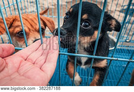 Close-up Of Male Hand Petting Caged Puppy In Pet Shelter. People, Animals, Volunteering And Helping